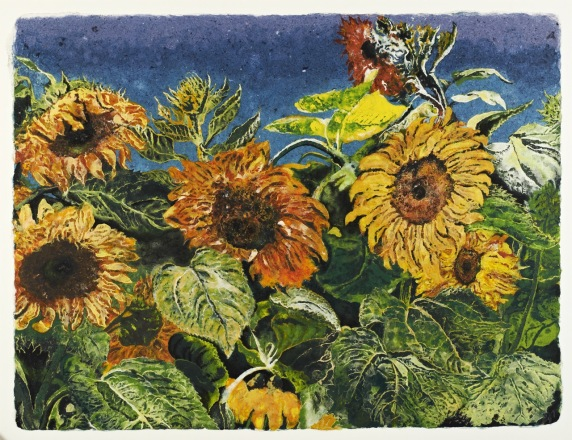 Californian Sunflowers 79 x 103 cm, in the studio